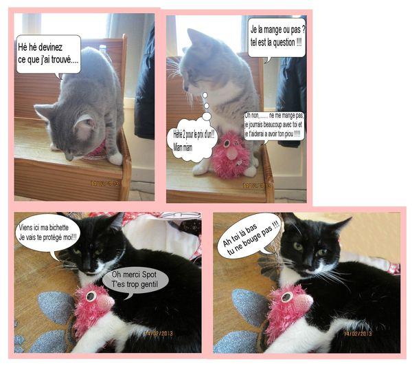 Enda et les chats