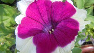 Fleurs012 (23)