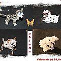 chiens 01 23-02-2006