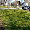 Mousseronnière au pied d'un lampadaire, parking fac des lettres, Pau...