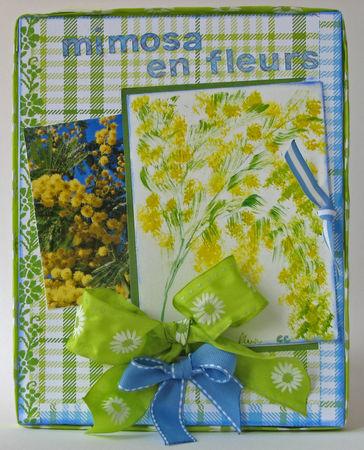 mimosa_en_fleurs