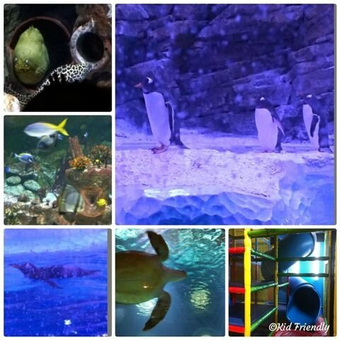 Aquarium Sea Life ©Kid Friendly