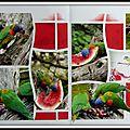 Pairi daiza 2014 - au coeur de la volière australienne