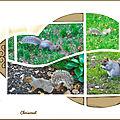 ecureuil de cetralpark3