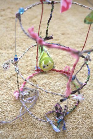cage_oiseau1