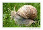 escargot_03