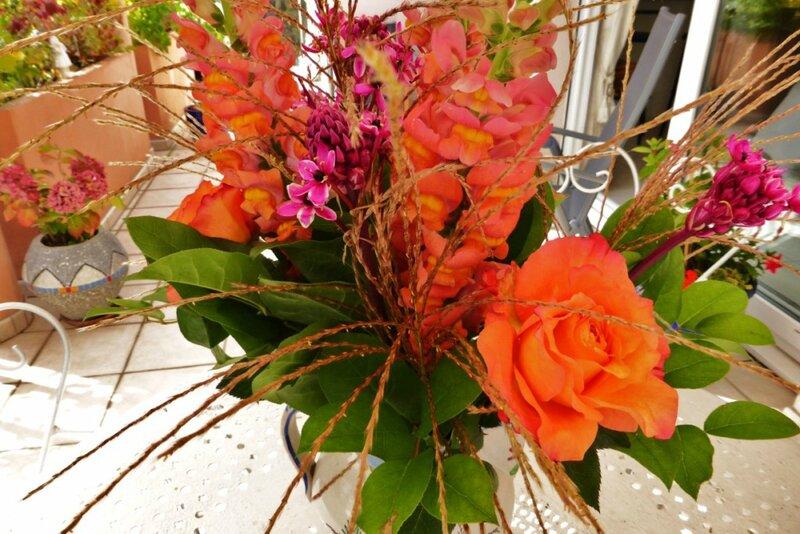 Au nom de la rose comment avoir de beaux rosiers - Puceron rosier savon noir ...