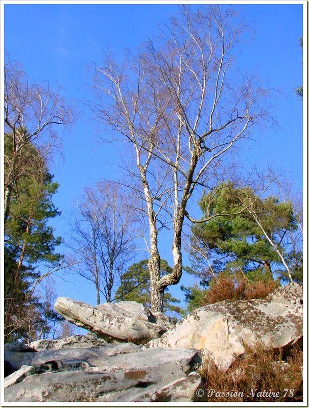 La forêt de Rambouillet vue sous un autre angle (26)