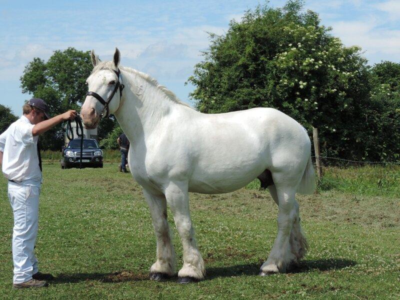 Océane 154 - 11 Juin 2017 - Concours d'élevage local - Bernaville (80) - 3e (Suitées)