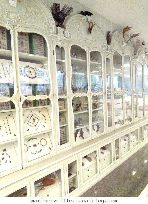 cabinet de curiosités 18 ème de Bonnier de la Mosson - médiathèque jardin des plantes