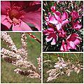 Fleurs du jardin (2)