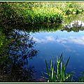 Lac Mimizan 05051540
