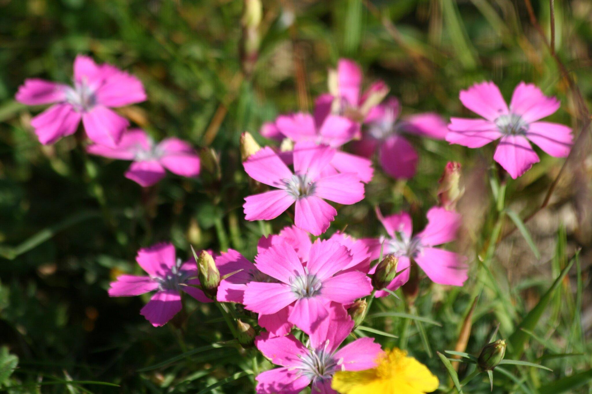 les fleurs de l'été