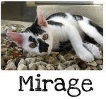 gagnant_mirage