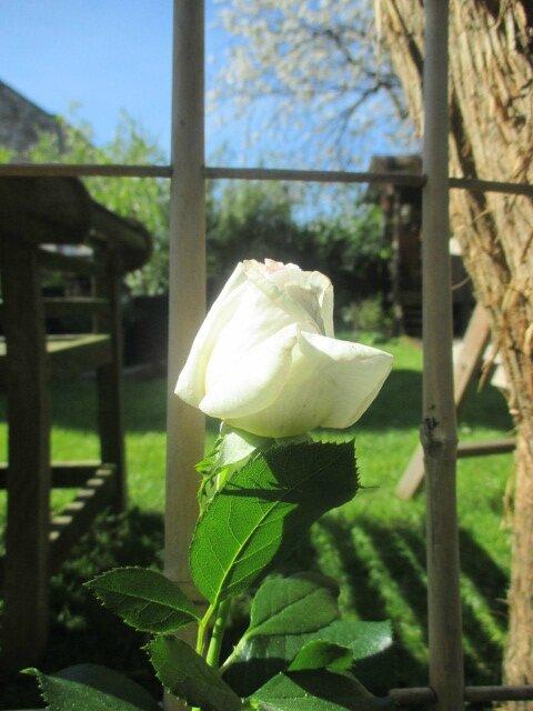 jardin 6 mai2016 015
