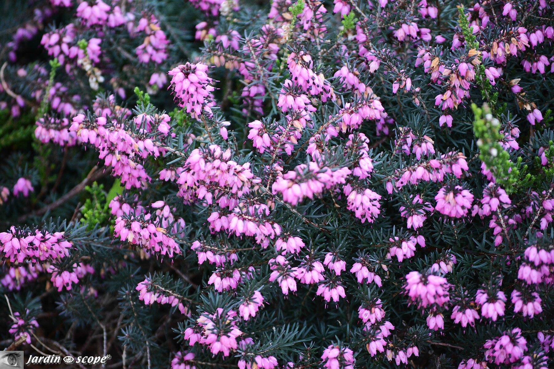 Ces plantes et ces fleurs qui bravent les hivers...