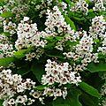 Fleurs de Leon 2406167