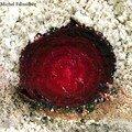 bettrave en croute de sel, Alain Passard