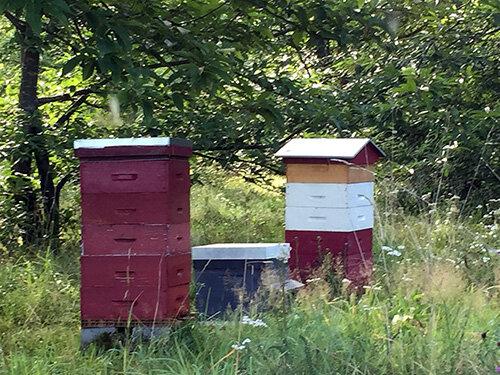 les ruches en production et une jeune ruche
