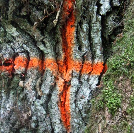 croix_orange_GP
