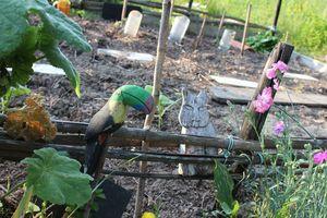 jardinIMG_8300