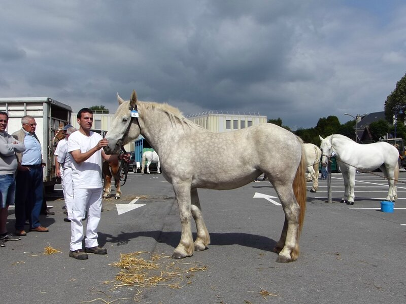 Duchesse de Souastre - 4e 2 ans - Local de St Pol - 20 Juin 2015 - Photo SHB