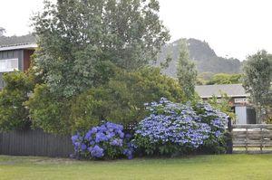 New Zealand - 0238