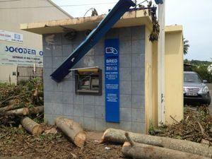 kaweni bred arbre tombé