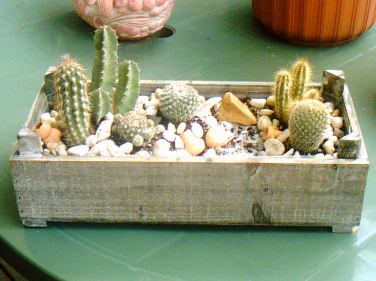 comment planter cactus pot. Black Bedroom Furniture Sets. Home Design Ideas