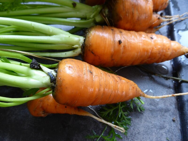 30-carottes (1)