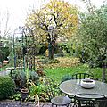 Duvet d'automne dans mon jardin  Coulommiers 77