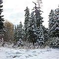 Or...donc... souvenirs du lac tahoe fin octobre