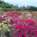 jardin Bora