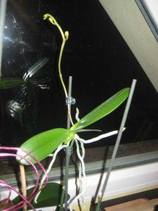orchidées_1024