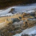 Sous le glacé la plage