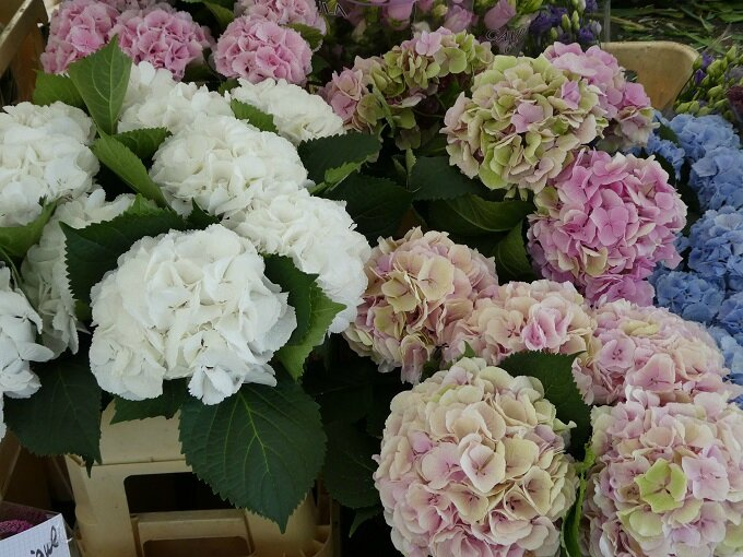 P1010154 Tours marché aux fleurs