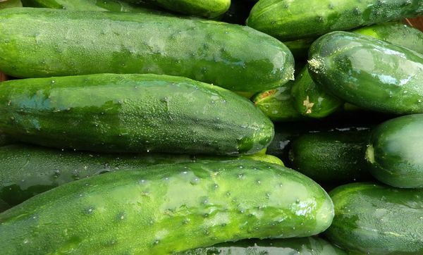 cool-as-a-cucumber-golden-russet-cukes-at-the-middlebury-farmers-market