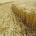 Les crop circle sont-ils des canulars?