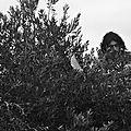 Nico dans l'arbre
