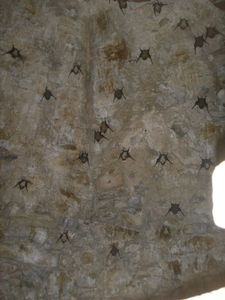 bats inside belltower