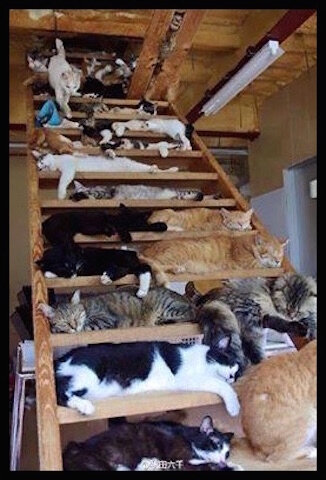 chats multitude