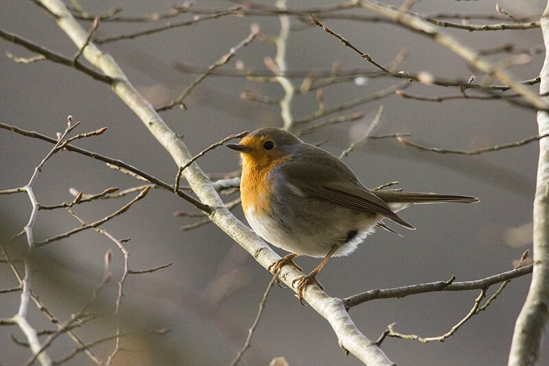 oiseau blog