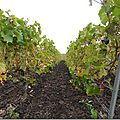 En route pour la viticulture durable