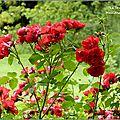 Les chemins de la rose (2)