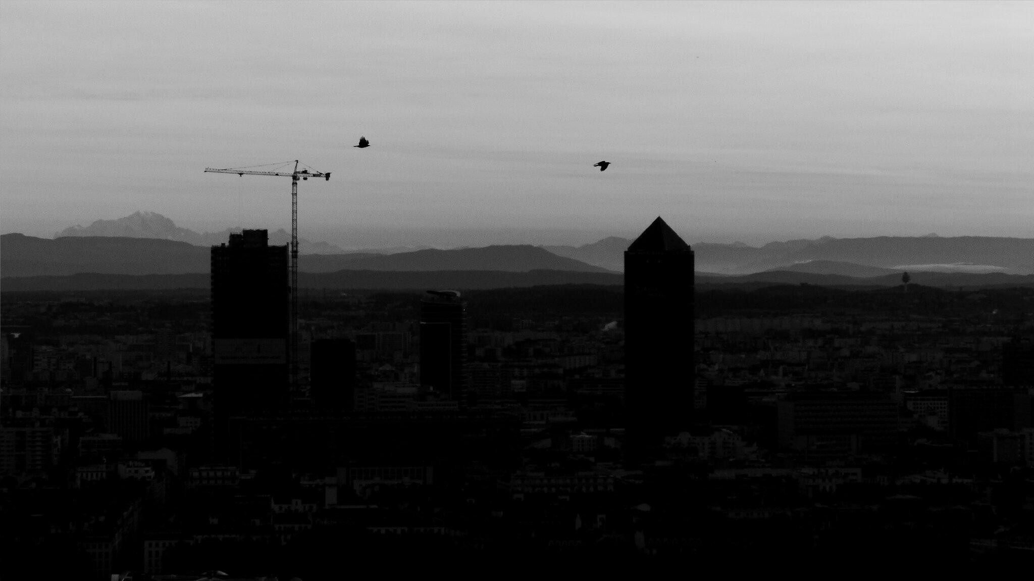 Ombres chinoises de Lyon un matin de novembre (2)