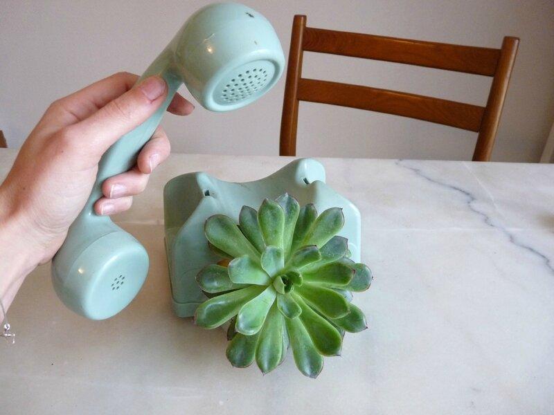 succulente2