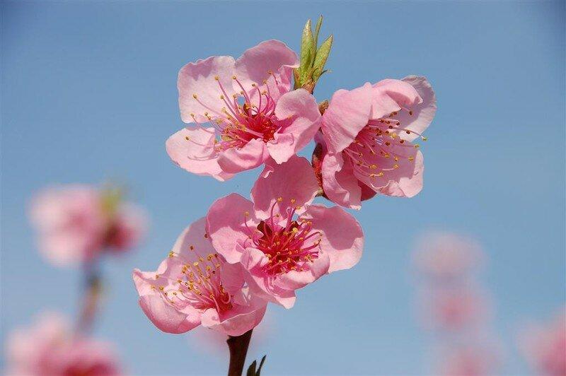 la beaut d 39 une fleur photo de le printemps en provence. Black Bedroom Furniture Sets. Home Design Ideas