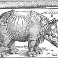 Voici 500 ans, le « rhinocéros de dürer » posait le pied en europe