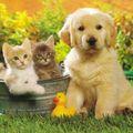 2 chats et 1 chien
