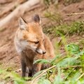 2014-05-30 LUX-0971
